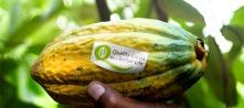 tn_736x327_crop_QPP_cocoa_pod_HR